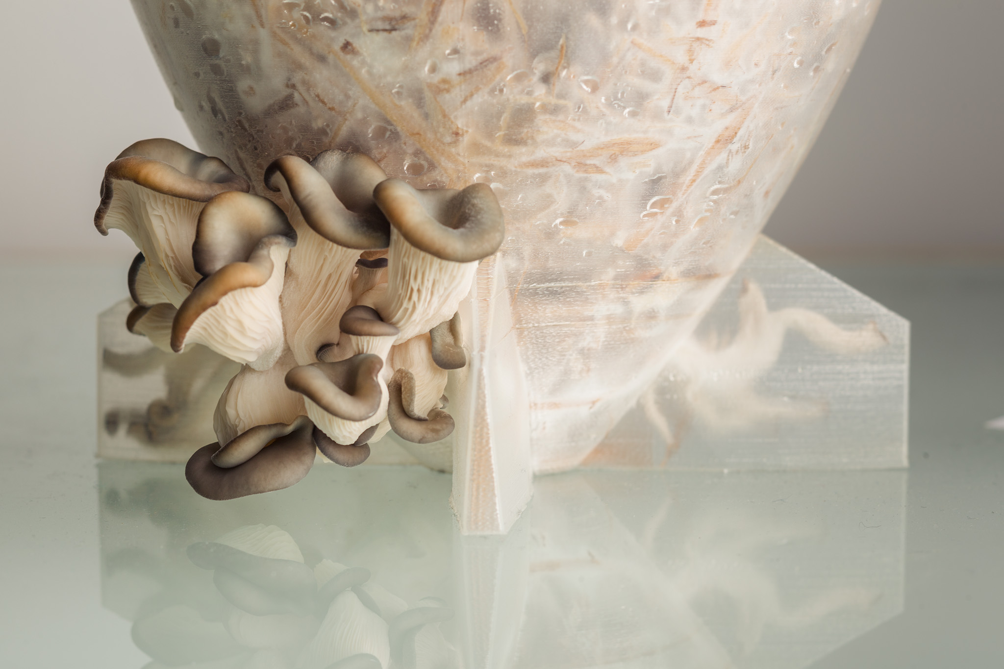 Third mushroom mold